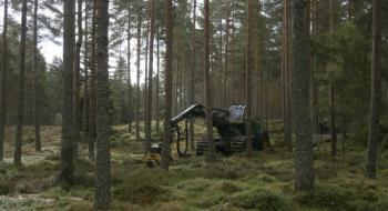 Specialist harvesting machinary carrying out thinning operations
