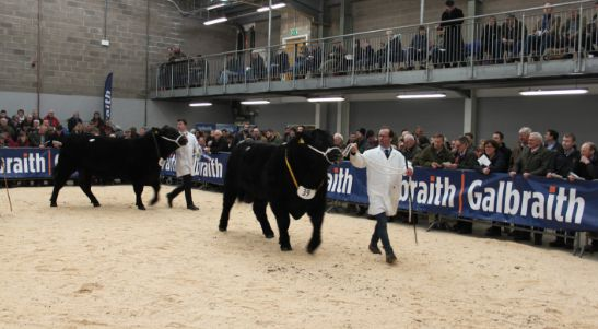 Galbraith Bull Sales Stirling