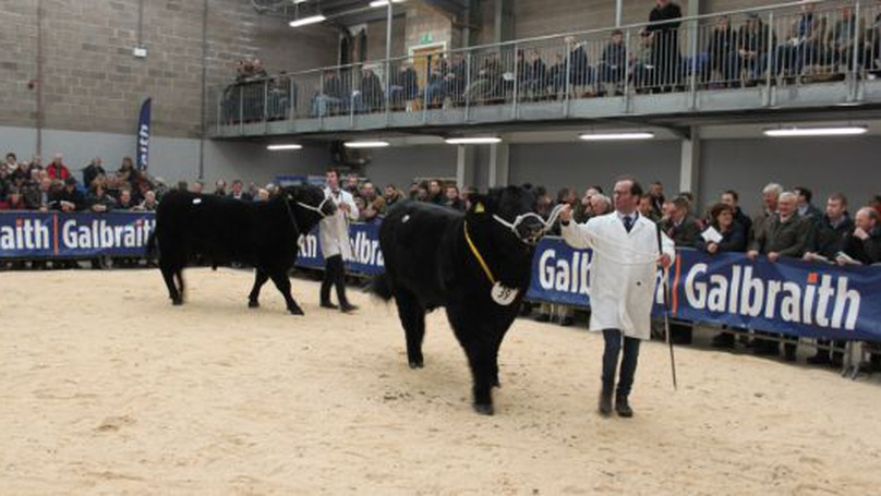 Stirling Bull Sales