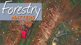 Forestry Matters 2019