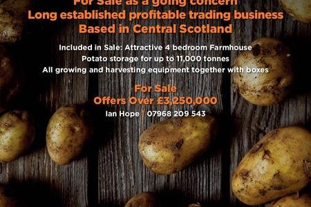 Seed Potato Business